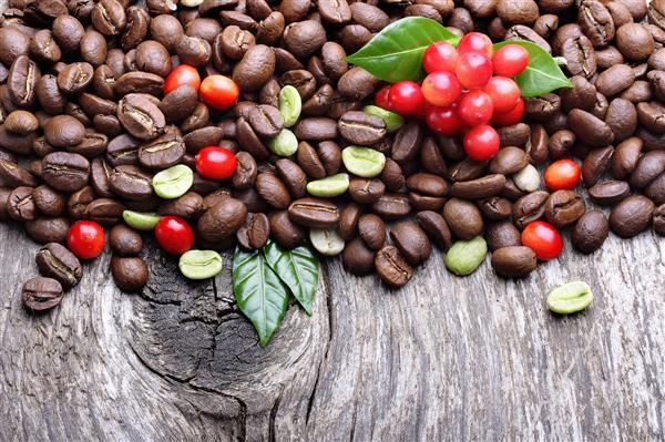 ลักษณะทางพฤกษศาสตร์โดยทั่วไปของกาแฟ
