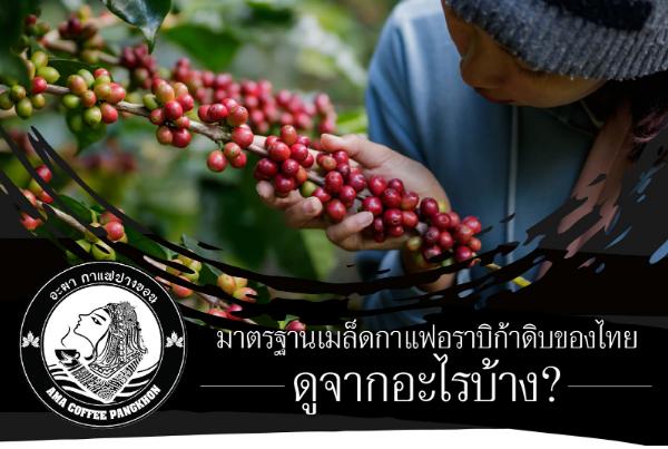 มาตรฐานเมล็ดกาแฟอราบิก้าดิบของไทย