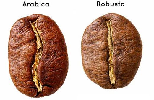 arabica-robusta