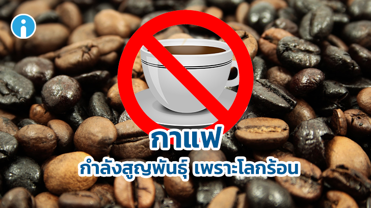 เตือนสายพันธุ์กาแฟอาจสูญพันธุ์